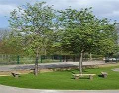 An Open Park Area with Artificial Grass in Wiltshire