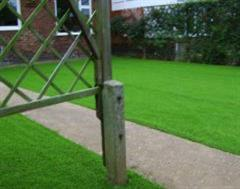 Artificial Grass through the fence